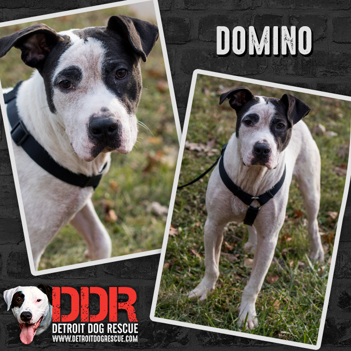 domino-thumb-1.jpg