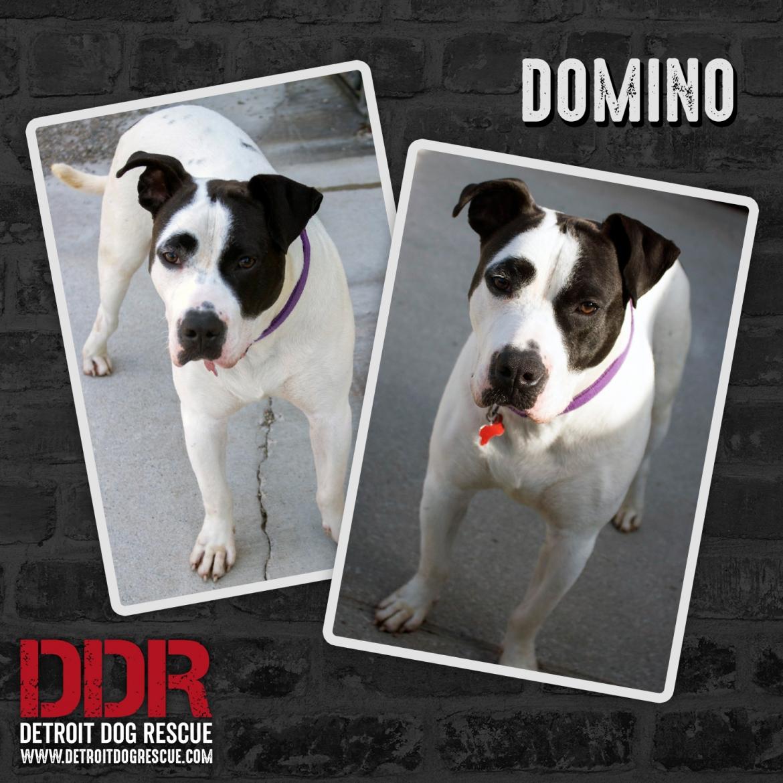 domino-thumb-3.jpg