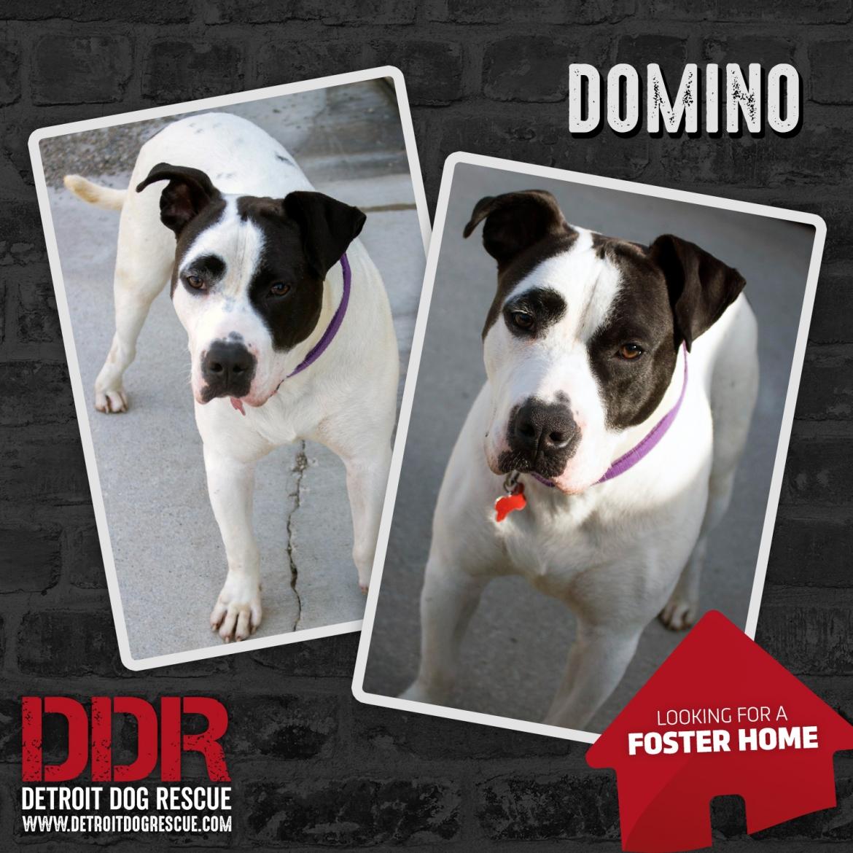 domino-thumb-foster.jpg