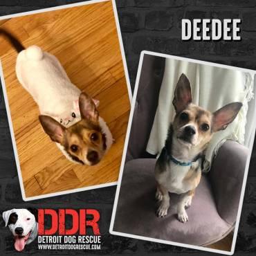DeeDee