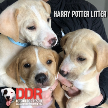 Harry Potter Litter