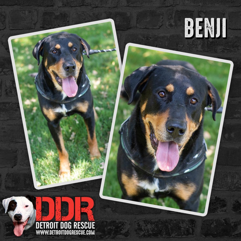 benji-thumb-1.jpg