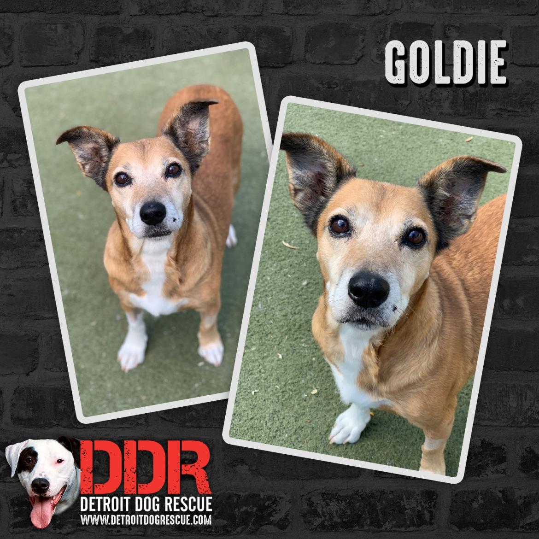 goldie-thumb.jpg