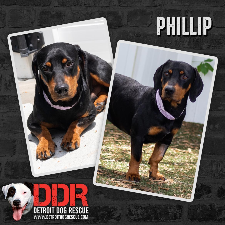 phillip-thumb-1.jpg