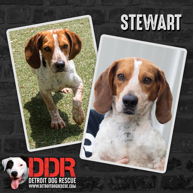 stewart-thumb.jpg