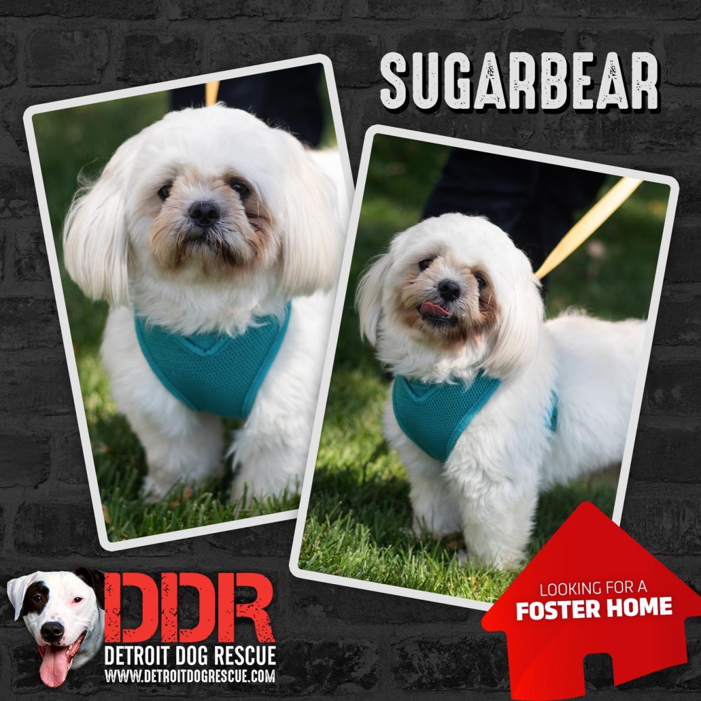 sugarbear-thumb.jpg