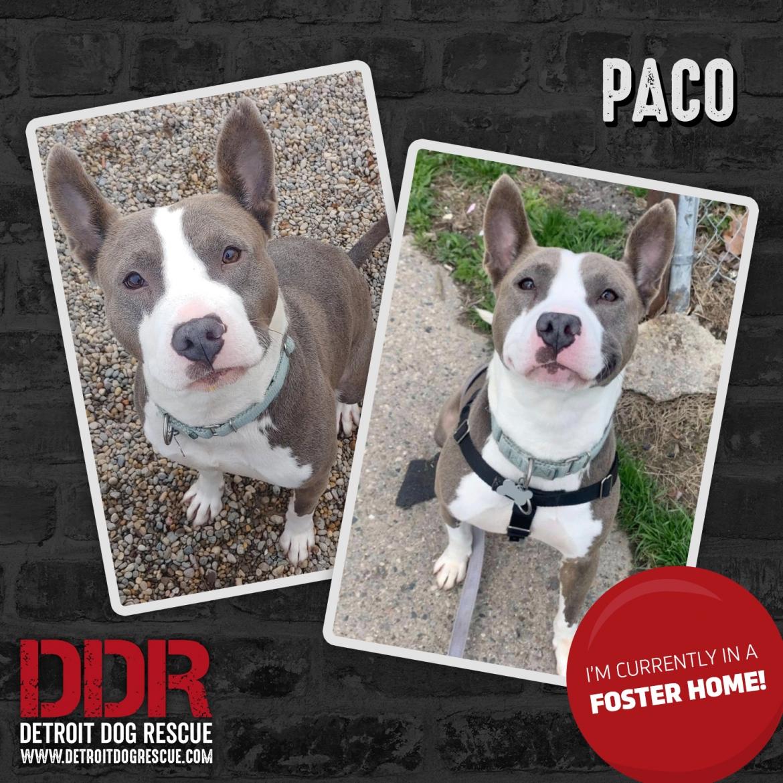 paco-thumb-infoster-1.jpg