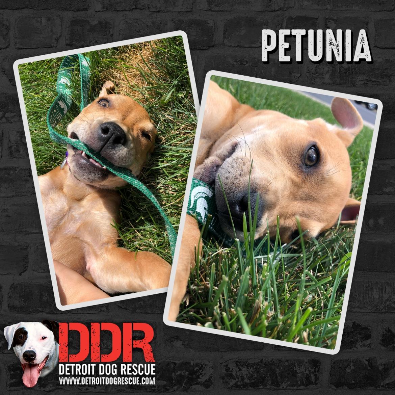 petunia-thumb.jpg
